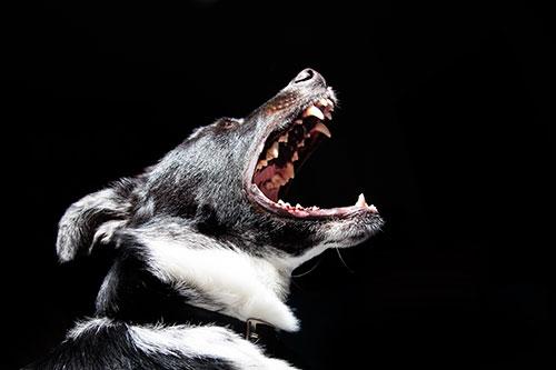 Sécurité_chien_dangereux1.jpg