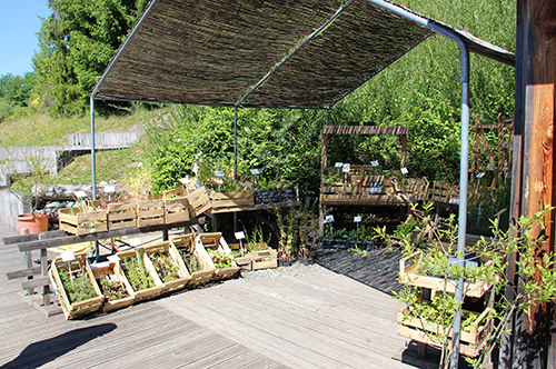 jardincimes2.jpg